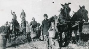 Potato harvest using horses / Cueillette de patates avec chevaux
