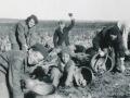 Cueillette de patates à la main / Picking potatoes by hand